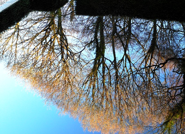Reflecting Pool reflection Veddw copyright Anne Wareham