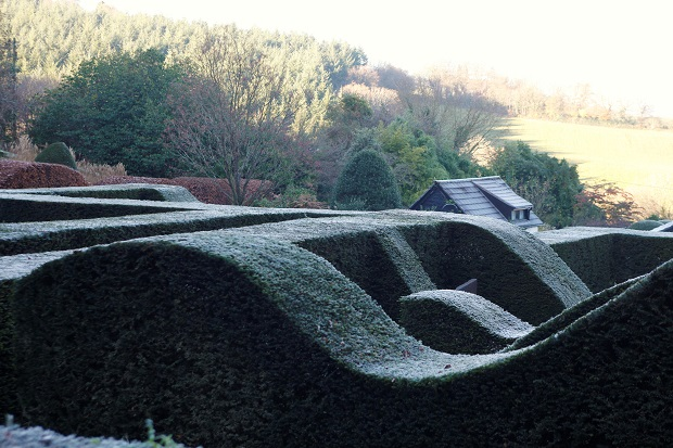 veddw-hedges-in-the-frost_-copyright-anne-wareham