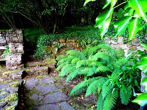 Ferns in Ruin  Veddw, copyright Anne Wareham SAM_2156 S