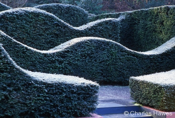 Veddw - South Garden - Hedges 1