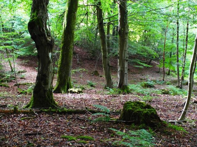The wood at Veddw SAM_2657PP Copyright Anne Wareham