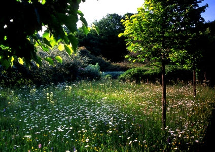 Meadow at Veddw copyright Charles Hawes