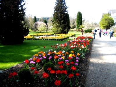 Bodnant tulips copyright Anne Wareham, Veddw
