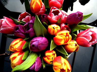 Tulips 2 copyright Anne Wareham