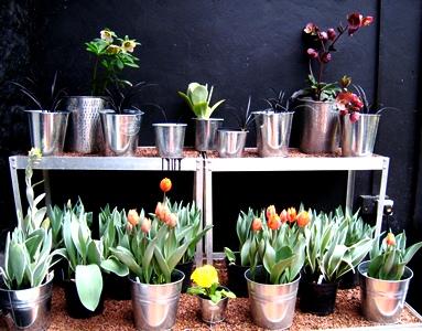 Conservatory, Veddw April copyright Anne Wareham