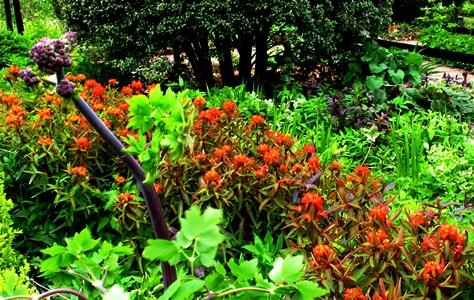 Front garden Veddw copyright Anne Wareham