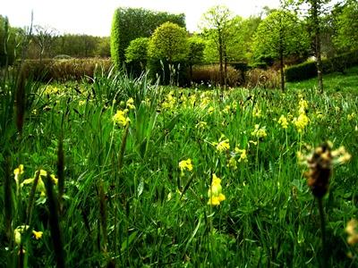 Meadow now Veddw copyright Anne Wareham