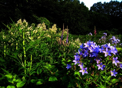 Crescent Border, Veddw, July 2012 copyright Anne Wareham