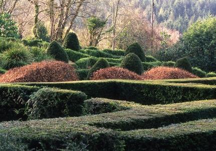 Hedges, Veddw copyright Charles Hawes