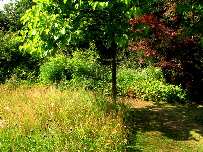 Meadow edging  Veddw copyright Anne Wareham