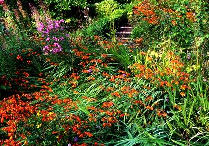 Wild garden, Veddw copyright Charles Hawes