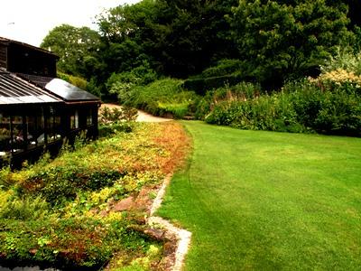 Alchemilla gone Aug 2013 Veddw South Wales Garden Attraction, copyright Anne Wareham