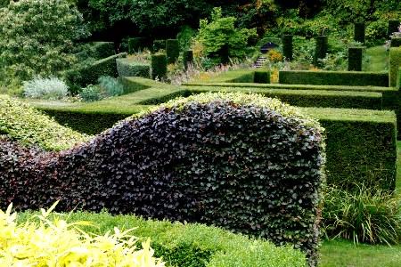 Beech Hedge, Veddw copyright Charles Hawes