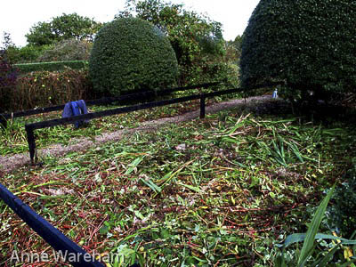 Front garden cutting down S, Veddw, Copyright Anne Wareham