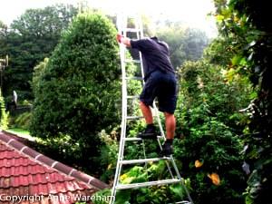 Niwaki Ladder at Veddw copyright Anne Wareham