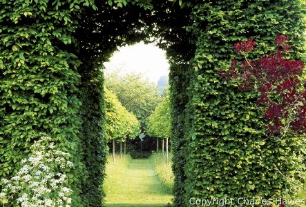 View into the Meadow and avenue of Corylus colurna through the Hornbeam Tunnel. Cotinus on right. Veddw House, Monmouthshire. May 2008