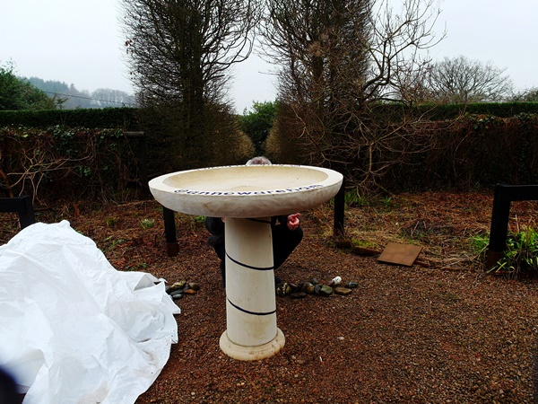 Bird Bath End of March 2014 Veddw Copyright Anne Wareham 010
