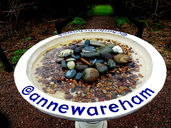 Bird Bath End of March 2014 Veddw Copyright Anne Wareham 011