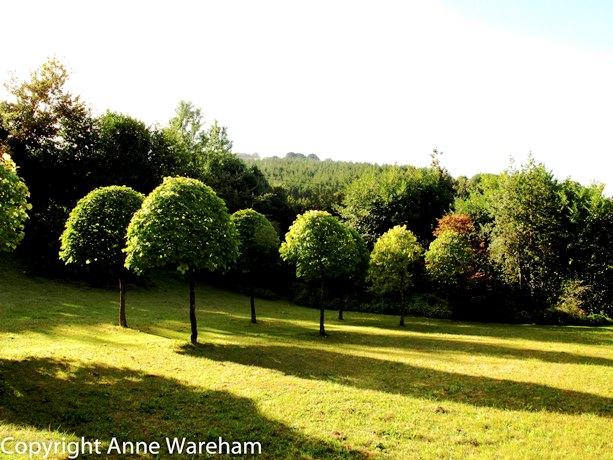 Meadow Veddw September 2013 copyright Anne Wareham