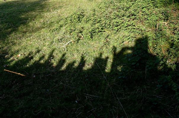Shadow April 2014 Veddw Copyright Anne Wareham 200