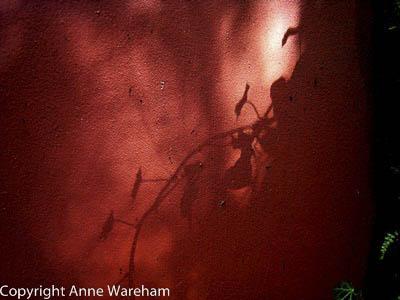 Shadow on ruin wall, Veddw, copyright Anne Wareham