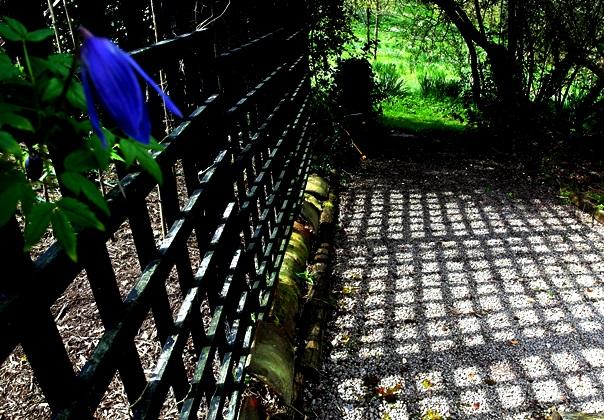 Shadow, trellis Mid April Veddw Copyright Anne Wareham