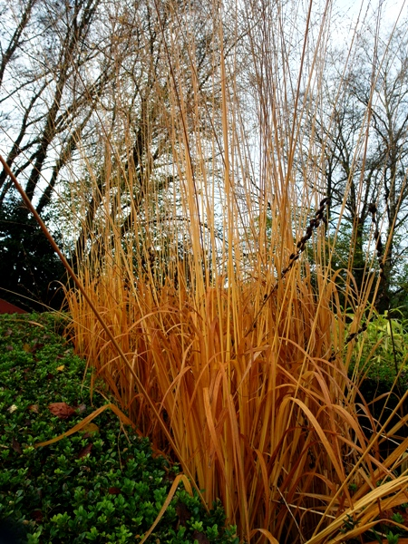 Grasses, Veddw, copyright Anne Wareham