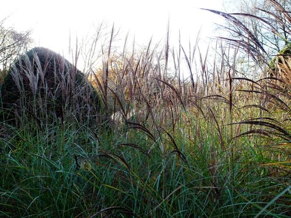 Grasses autumn, Veddw copyright Anne Wareham