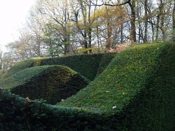 Hedges,, Veddw copyright Anne Wareham