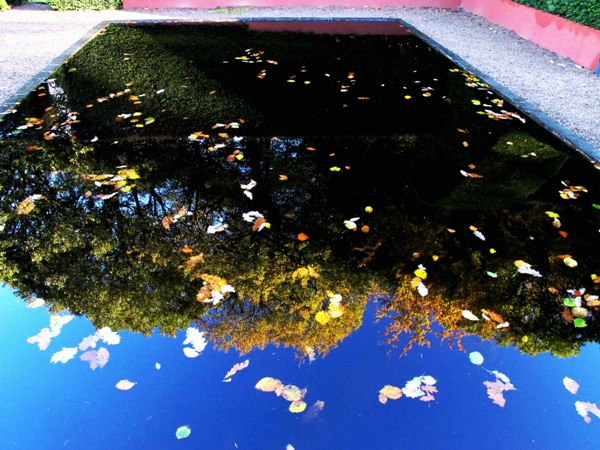 Reflecting Pool with leaves November Copyright Anne Wareham