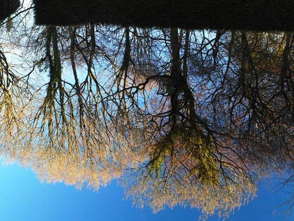 Reflections January 2014 Veddw copyright Anne Wareham