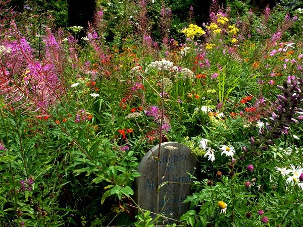Wild Garden Early August Veddw Copyright Anne Wareham