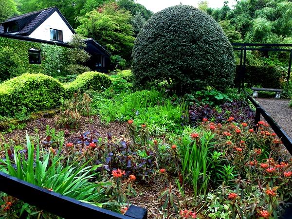 Euphorbia at Veddw Copyright Anne Wareham SAM_0626