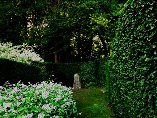 The stone and persicaria, Veddw copyright Anne Wareham 071 s