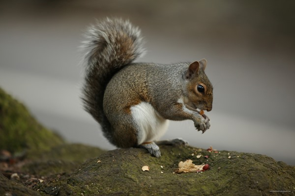 Post image for What to do with a Squirrel (without getting prosecuted) by Anne Wareham