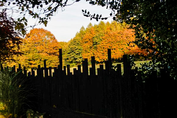 fence-at-veddw-copyright-anne-wareham-