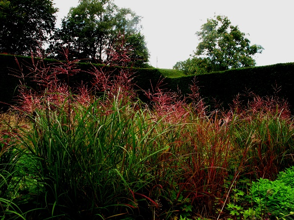 miscanthus-in-new-garden-sept-14-13-copyright-anne-wareham-