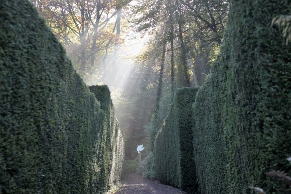 yew-walk-veddw-copyright-anne-wareham